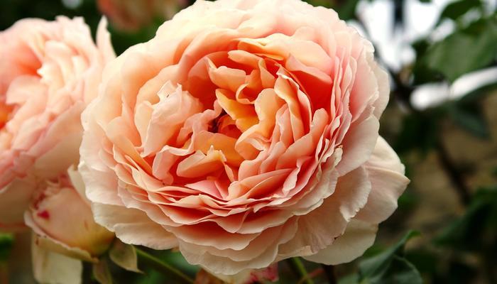 7 незабываемых цветочных ароматов: что посадить, чтобы сад заблагоухал