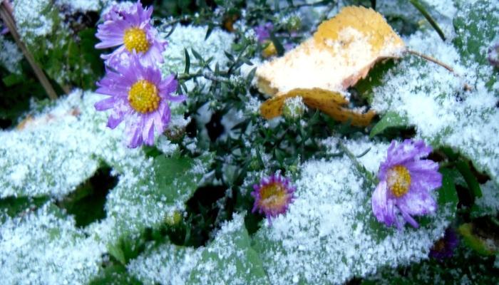 Вот и первый снег...