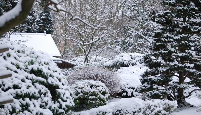 Как подготовить сад к зиме: традиции и заблуждения
