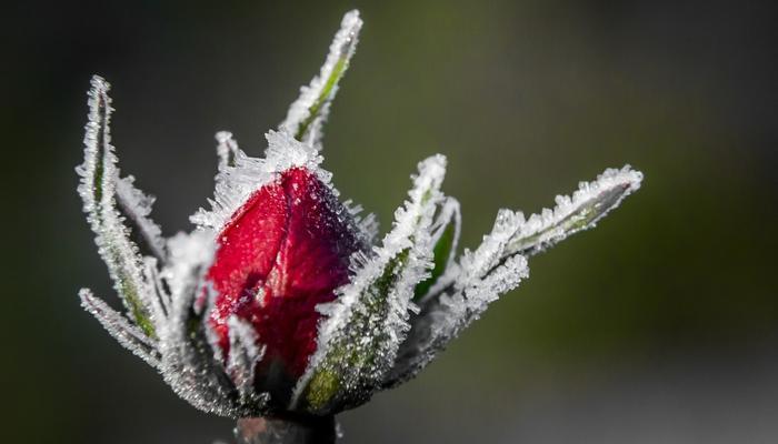 Скидки недели в интернет-магазинах семян и посадочного материала