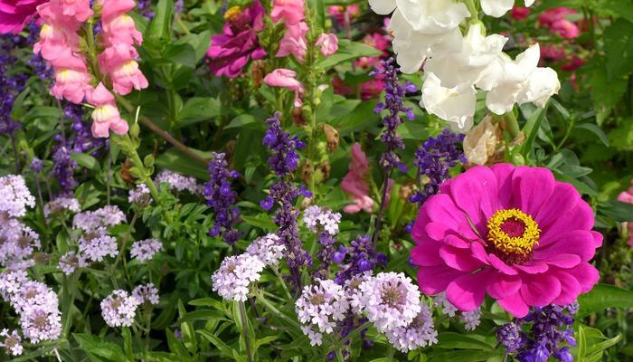 Нужны ли в саду однолетники?