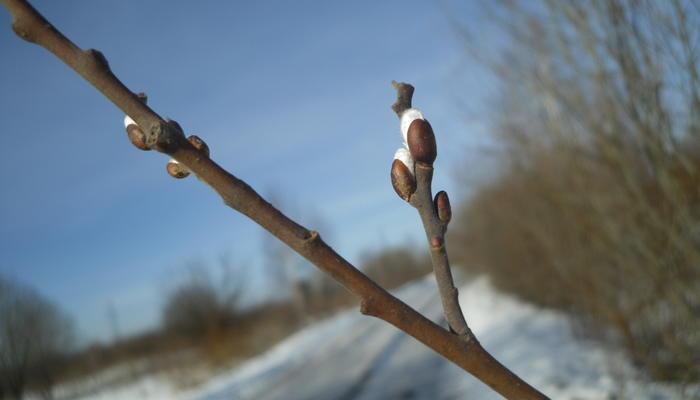 Весна идет по расписанию. Экскурсия в прошлое
