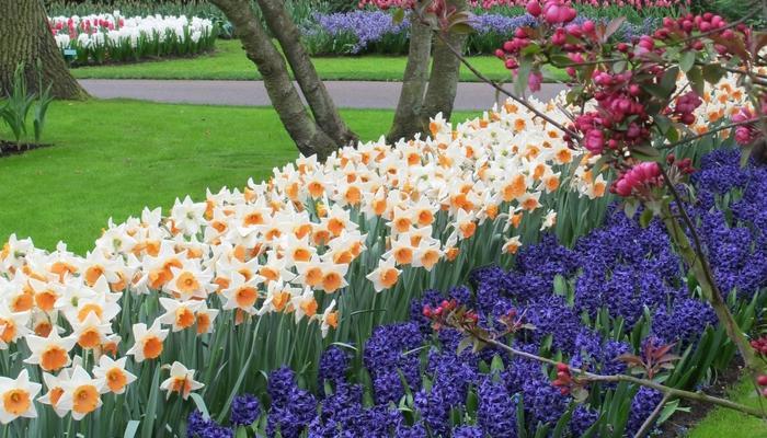 Готовимся к весне! Выбор луковичных растений для осенней посадки