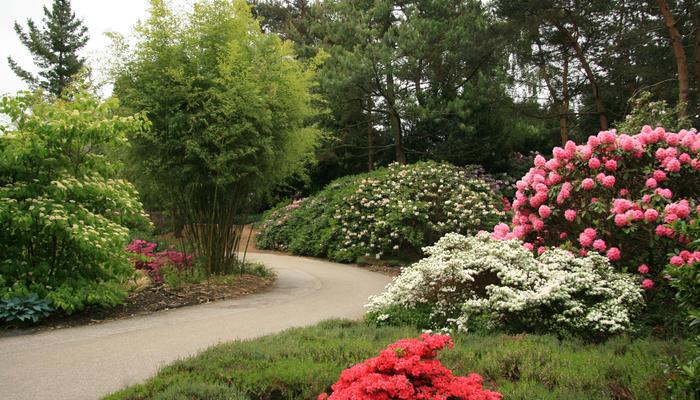 Сад цветущих кустарников
