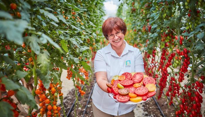 Главные слагаемые хорошего урожая томатов