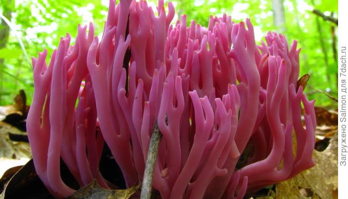 Самые удивительные грибы мира