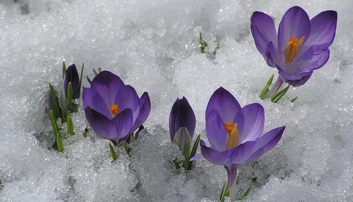 Поздравляю с Праздником 8 Мартa