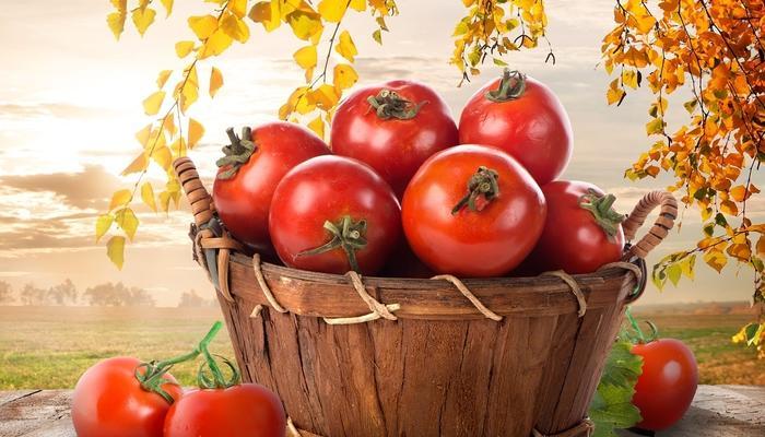На 7 дач - томатные выходные!