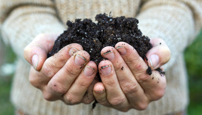 Пора готовить почву для рассады