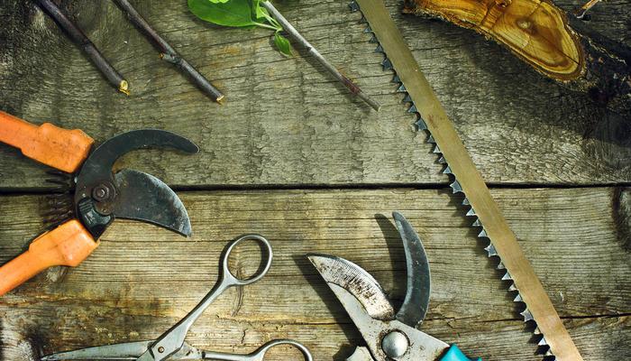 Необходимые инструменты для обрезки деревьев и кустарников