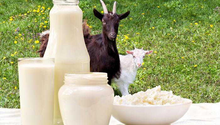 Как сделать брынзу из козьего молока