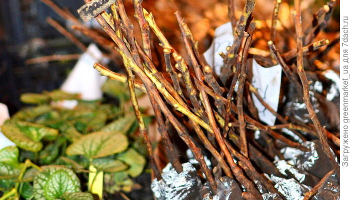 Как сохранить посадочный материал до весны?