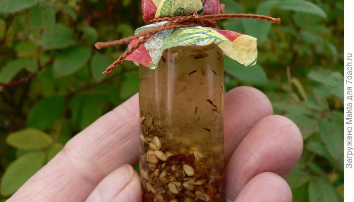 Масло из семян шиповника в домашней аптечке