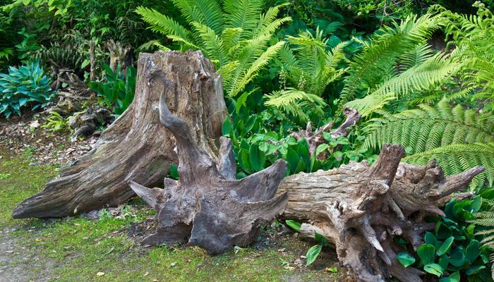 Время собирать корни, или Как создать рутарий на дачном участке