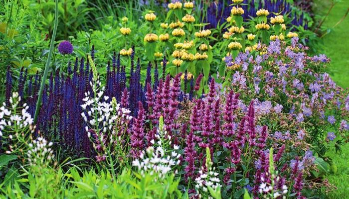 Фиолетовые фантазии: растения для цветника в модной цветовой гамме