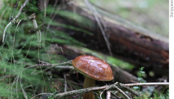 На болото за грибами!