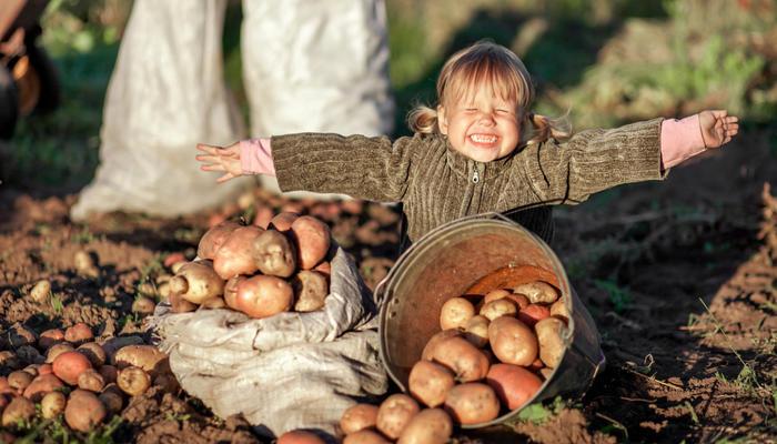Полторы тонны картошки для похудения