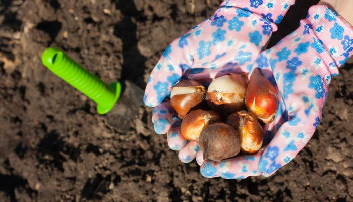 5 советов по посадке луковичных
