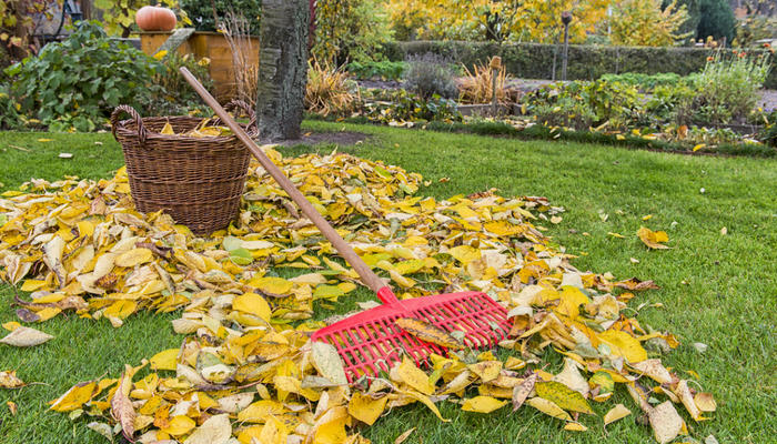 Осенний уход за газоном: что нужно обязательно сделать