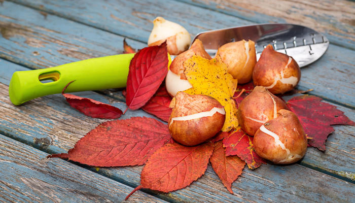 10 луковичных, которые нужно успеть посадить осенью