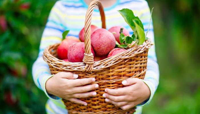 Защита сада без яда: 15 простых шагов