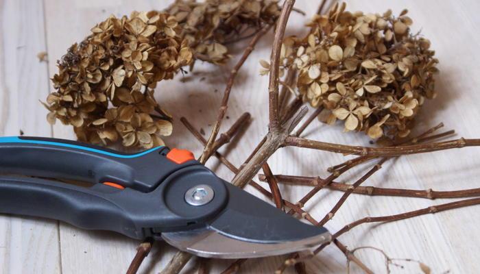 Как обрезать гортензию метельчатую