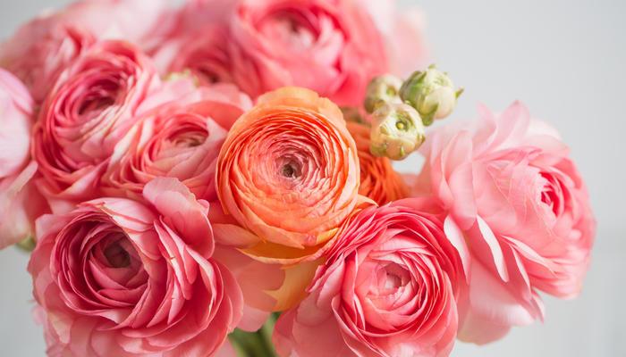 Ранункулюсы – цветы невест