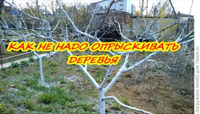 Дачный влог №5. Как не надо опрыскивать деревья