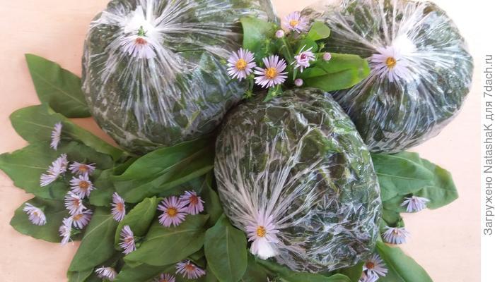 Замороженный щавель: вкусные щи на зиму обеспечены