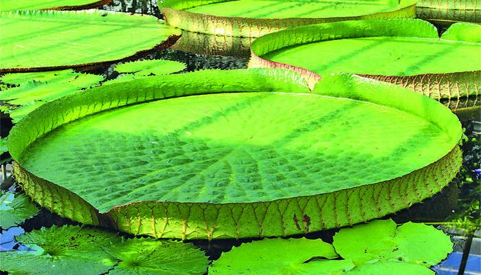 Растения-рекордсмены