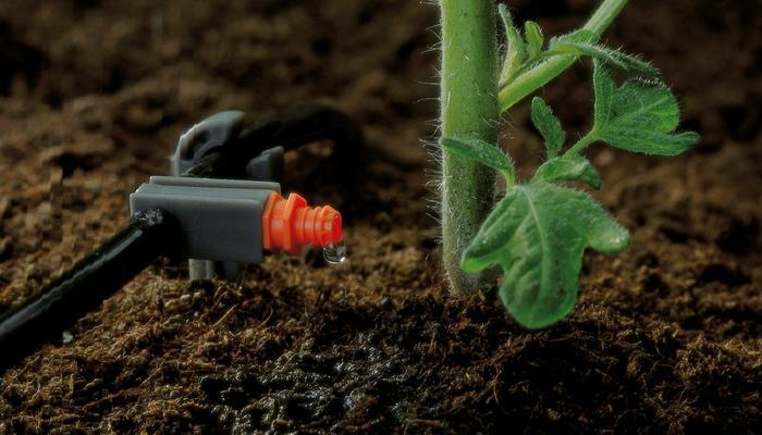 Капельный полив теплицы: как рассчитать стоимость