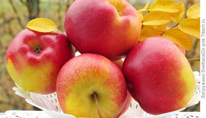 """""""Ода яблоку"""", или """"Любите ли вы яблоки так, как люблю их я?"""""""