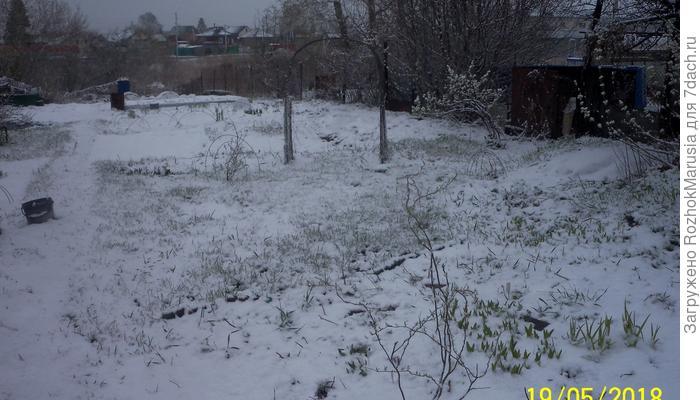 Весна по-сибирски!!! Снеговик и газон! Это по нашему!!!