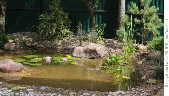 Пруд в саду - воплощённые мечты детей