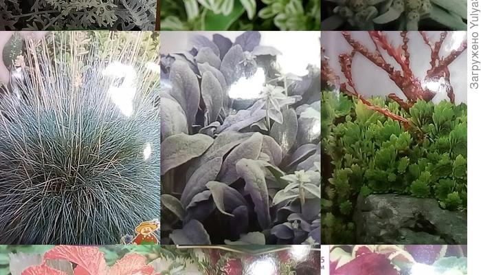 План посадки декоративно-лиственных растений