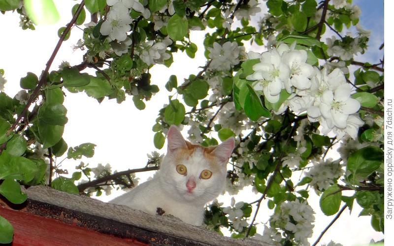 Маруся решила проверить, что творится у нас  на крыше