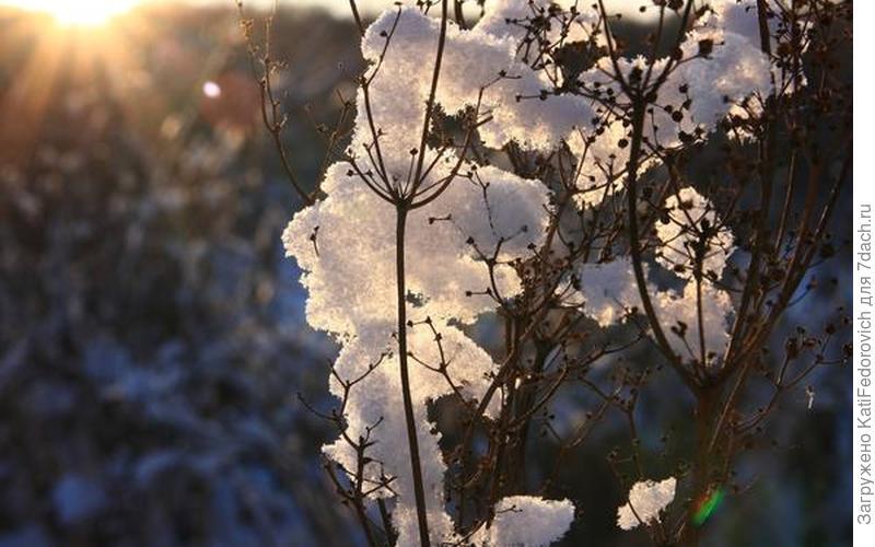 Снег на солнце