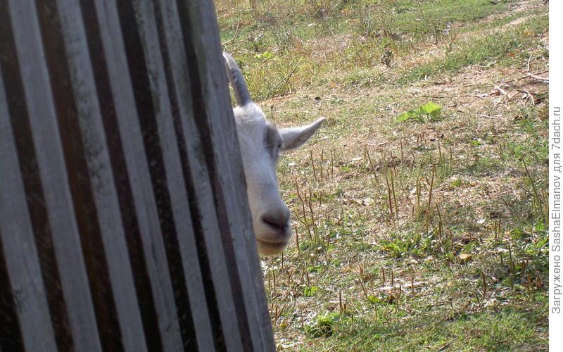 Один глаз, один рог, но не носорог