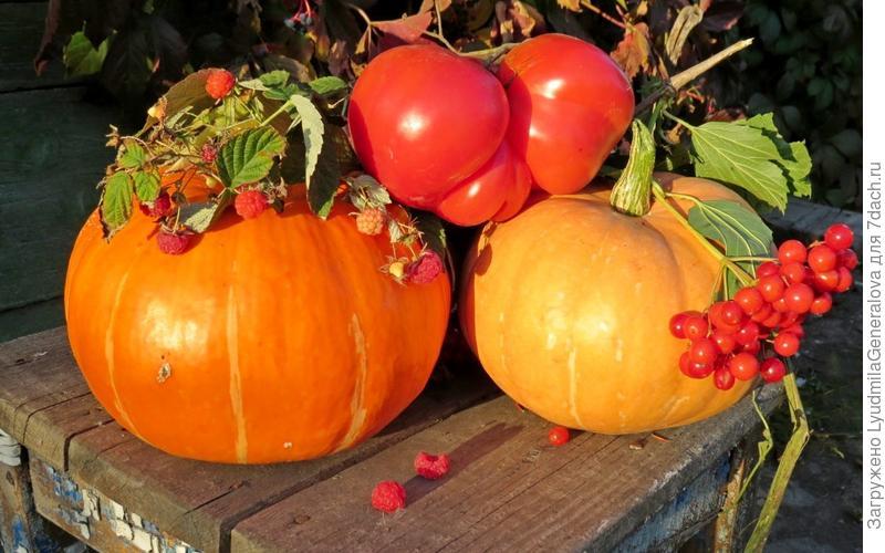 К тыкве - ягодно-овощной бонус