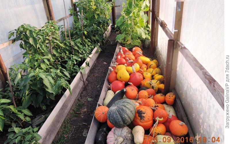 Малая часть урожая