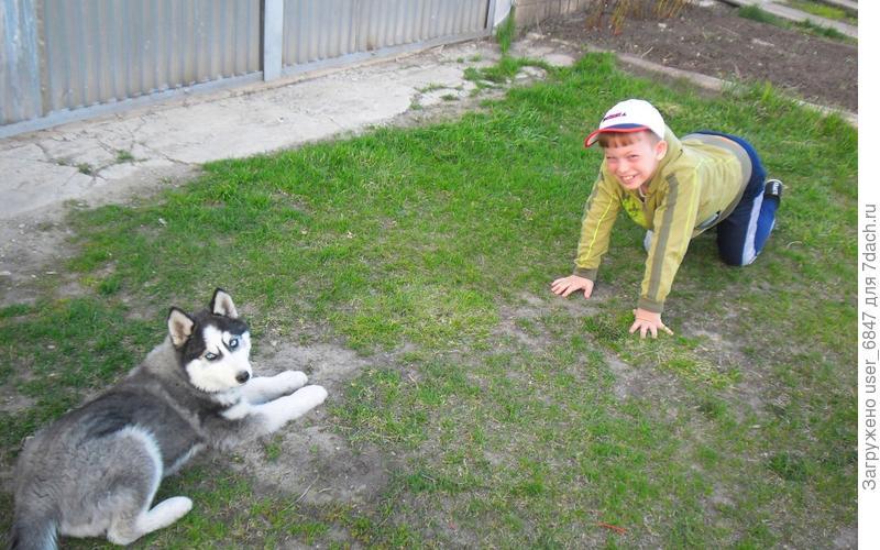 Хочу рассказать о нашей домашней любимице.  Как вы догадались, конечно, это собака. Начну с того, как она у нас появилась. Собака-была моей  мечтой, но родители не разрешали  завести мне щенка, так как  это большая ответственность. Не знаю, и не могу сказать почему, но я всегда хотел сибирскую хаски.  И в один прекрасный зимний вечер моя мечта сбылась - папа привез щенка сибирского хаски.