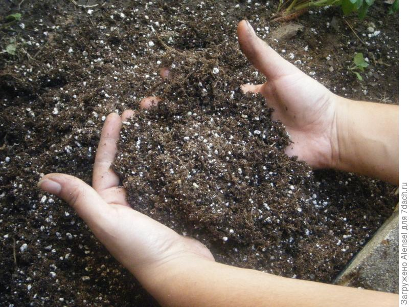 Калийные удобрения, перемешанные с почвой