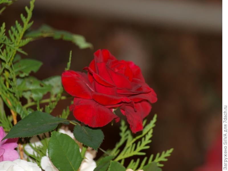 роза в настольном букете в гостинной