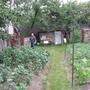 Урожай винограда в Калуге