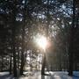 Солнечный пейзаж в лесу. Свет и тени.