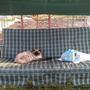 Маркиз устал и решил отдохнуть.