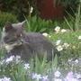 Это мой прекрасный сад!
