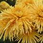 Что цветет в Никитском ботаническом саду в конце ноября?