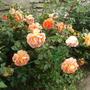 Романтические розы: нет предела совершенству
