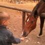 В гости к лошадке